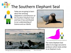The-Southern-Elephant-Seal